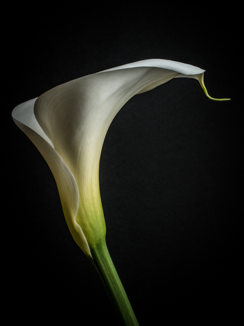 Flower Photography Musings From The Cold