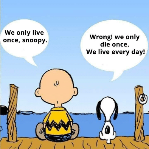 we-only-live-once-snoopy-wrong-we-only-die-once-43819656